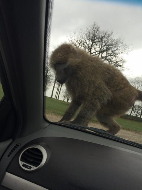 Knowsley Safari Park Day Trip