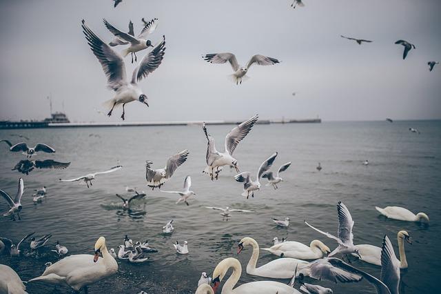 Kids Chasing Birds